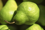 Close up selective focus photograph of some Packham's pears