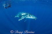 Jesse Cancelmo photographs humpback whale, Megaptera novaeangliae, young male, Nomuka group, Ha'apai Islands, Kingdom of Tonga, South Pacific