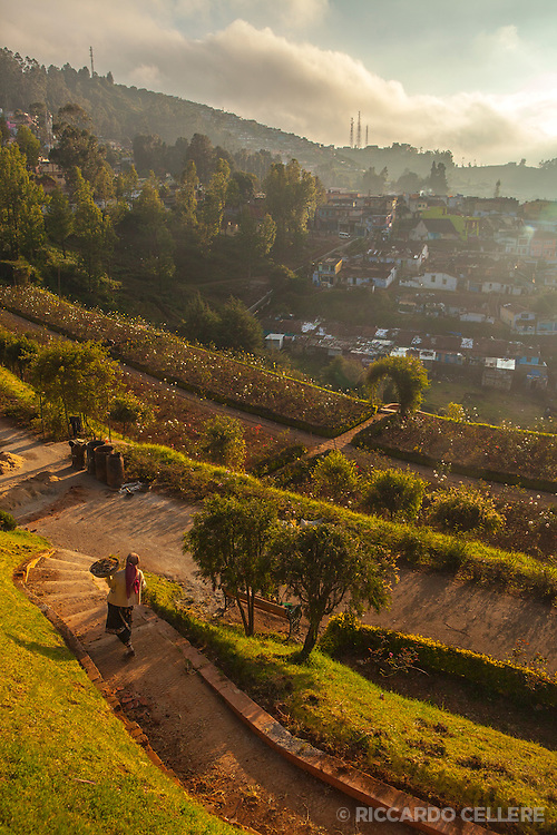 View of Ooty from the public rose garden
