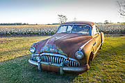 Vintage 1950's Buick parked in a cotton field in Clarksdale, Mississippi.