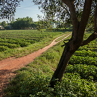 A footpath through Thủy Phư commune near Hue, Vietnam.