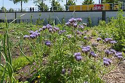 Luchtsingel Park Pompenburg, Rotterdam centrum, Zuid Holland, Netherlands