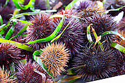 Street market merchant's stall with sea urchins oursin with sharp needles, some cut open showing the red and white meat coral that you can eat Sanary Var Cote d'Azur France