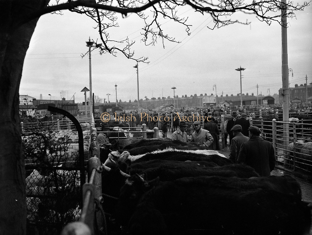 Early morning scene at Dublin Cattle Market (for The Kerryman).21/01/1959