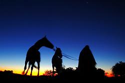 Gaúcho e seus cavalos na fazenda Santa Helena,  em Encruzilhada do Sul.<br /> FOTO: Jefferson Bernardes / Preview.com