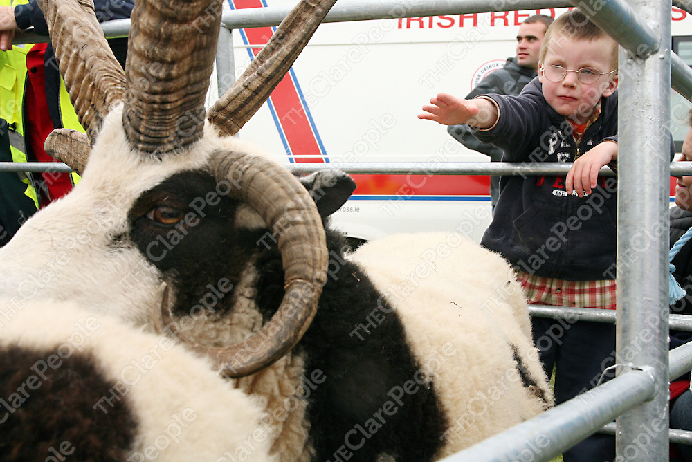 Emmett Harhen from Lahinch was very interested in the unusual sheep on display at the Mullagh Show on Sunday.<br /><br />Photograph by Yvonne Vaughan.