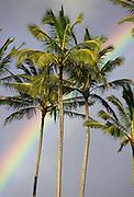 Rainbow, Palm Trees, Hawaii, USA<br />