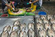 Fish market, Klong Toey