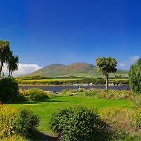 Palm Trees in southwest Kerry, Camping Site Mannix Point, Cahersiveen, Co. Kerry, Ireland /ch098