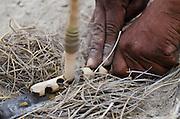 Kalahari Bushmen making fire<br /> Makgadikgadi Pans, Kalahari Desert<br /> Northeast BOTSWANA<br /> HABITAT & RANGE: