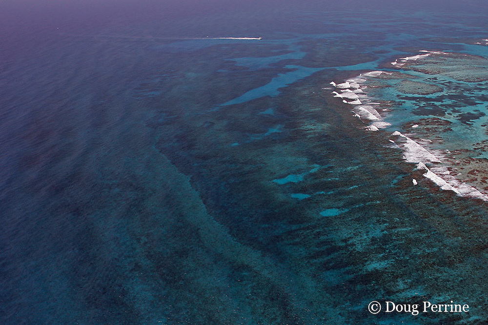 aerial view of Gladden Spit, a promontory of the Belize Barrier Reef, known locally as the Elbow or Point of Reef, where currents attract fish spawning aggregations, showing reef top, reef crest, and spur and groove coral formations; dive boat is returning from whale shark zone outside reef toward pass through reef;  near Placencia, Stann Creek District, Southern Belize, Central America ( Caribbean ), Gladden Spit and Silk Cayes Marine Reserve