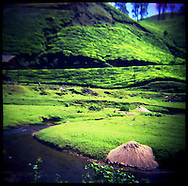 Landscapes in Kerela, South India.