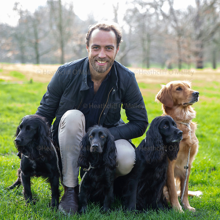 Mcc0094098 . Daily Telegraph<br /> <br /> DT News<br /> <br /> James Middleton with his three working Cocker Spaniels Luna, Inka and Ella and <br /> Working Golden Retriever Mable .<br /> James is Ambassador for the Kennel Club's Friends for Life 2020 dog hero competition .<br /> <br /> London 18 February 2020