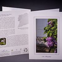 Although not native to the state, the purple lilac is NH's state flower.  Story about how it became significant to NH is highlighted on the back of the card. <br /> <br /> Artemis Photo Greeting Cards featuring NH native flora and fauna and historic sites. The cards are made exclusively in NH made from 100% FSC recycled paper, manufactured with wind and water power, and are archival acid free paper. Each card includes details on the back about the image, including interesting anecdotes, historic facts, conservation status, and recipes.