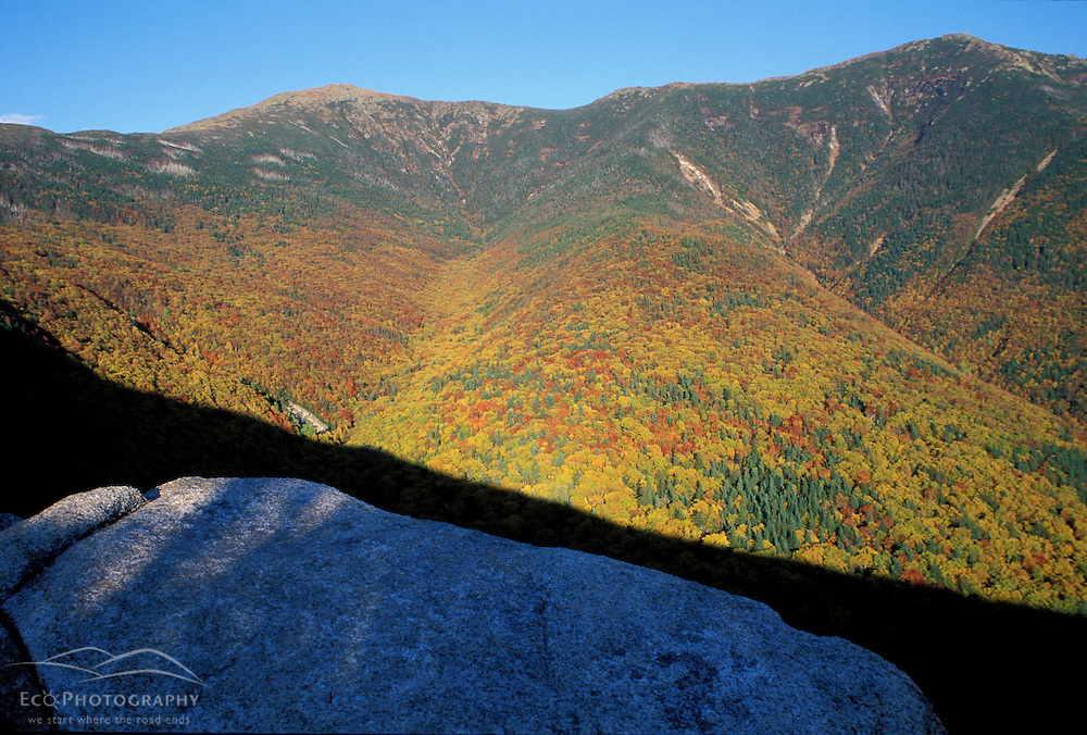 Forests. Foliage on the slopes of  Mt. Lafayette. White Mountain National Forest.  Old Bridle Path, Mt. Lafayette, NH