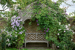 Arbour with Clematis viticella 'Emilia Plater' and Rosa 'Blush Noisette' on the left and Clematis 'Jorma on the right