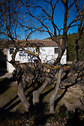 Shadow of tree on house, Olivella, Garraf, Catalonia, Spain
