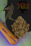 Barry Bonds OG nug photo shot in a professional photography studio.
