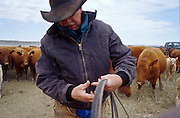 19 MAY 2002 - INGOMAR, MONTANA, USA: A cowboy on the Hoff ranch near Ingomar, MT, during the branding of the spring calves, May 19, 2002. Ranches across Montana and the American west start branding their spring crop of calves in April and continue through May. This year's crop of calves is lower than in years past because of the drought gripping much of the west. Many ranches have moved to branding tables and chutes but the Hoff ranch still brands the traditional way by roping individual calves out of the herd. .PHOTO BY JACK KURTZ