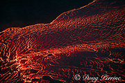 aerial view of lava originating from Kilauea Volcano, flowing as an incandescent river from fissure 8 in Leilani Estates subdivision, near Pahoa, toward Kapoho, Puna District, Hawaii ( the Big Island ), Hawaiian Islands, U.S.A.