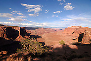 Overlook of the Canyonlands National Park from Island in the sky