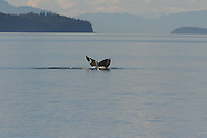 07: INSIDE PASSAGE HUMPBACK WHALES