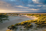 The evening sun highlights a curve in the dune grasses at Holkham. North Norfolk, East Anglia.