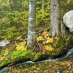 A stream cascades towards the Bear River in Maine's Grafton Notch.