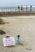 Seals At Children's Pool, La Jolla, San Diego, California (SD)