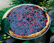 Blueberry and red huckleberry pie made by Jay Crondahl and displayed on Rie Munoz's porch in Tenakee Springs, Alaska.