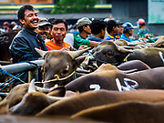 06 AUGUST 2017 - MENGWI, BALI, INDONESIA: Men chat while they wait to get their Balinese cattle weighed and checked in at the Bringkit Market in Mengwi, about 30 minutes from Denpasar. Bringkit Market is famous on Bali for its Sunday livestock and poultry market. Hundreds of the small Bali cows are bought and sold there every week. Bali's local markets are open on an every three day rotating schedule because venders travel from town to town. Before modern refrigeration and convenience stores became common place on Bali, markets were thriving community gatherings. Fewer people shop at markets now as more and more consumers go to convenience stores and more families have refrigerators.     PHOTO BY JACK KURTZ