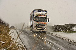 Pictured: No matter the weather deliveries still need to get through<br /> <br /> Poor weather conditions are taken in their stride by animals and workers on the A701 between Broughton and Moffat. <br /> <br /> Ger Harley   EEm 23 February 2017