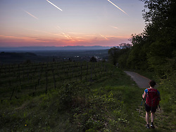 Woman hiking on vineyard terraces of mount Kaiserstuhl, Baden-Wuerttemberg, Germany