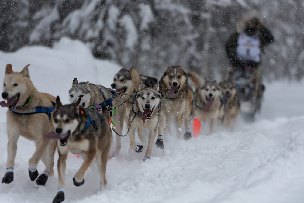 A team of sled dogs run by Fabio Berlusconi during the 2020 Iditarod on a trail from Willow towards Long Lake near Willow, Alaska.