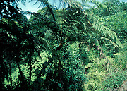 Jungle, Golfito National Park, Costa Rica,