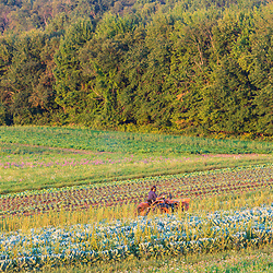 A farmer drives his tractor through a field of vegetables on a farm on Kinney Hill in South Hampton, New Hampshire.