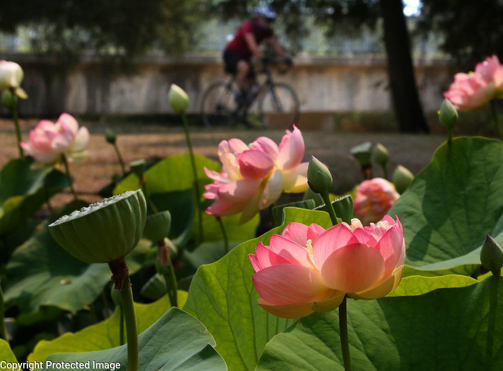 San Lorenzo Park Duck Pond.<br /> Photo by Shmuel Thaler <br /> shmuel_thaler@yahoo.com www.shmuelthaler.com