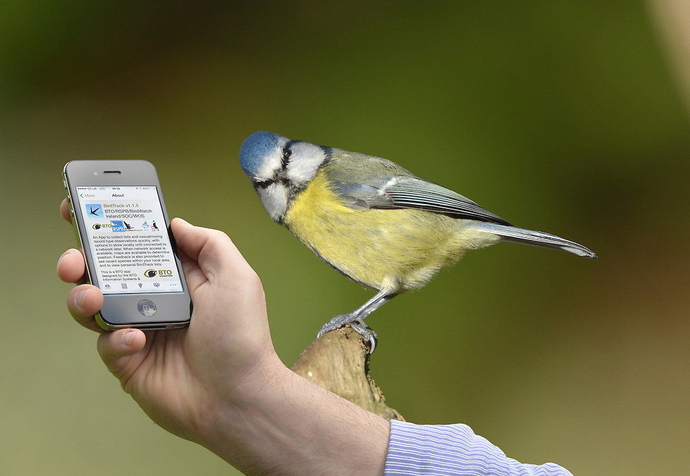 BTO Birdtrack and BlueTit