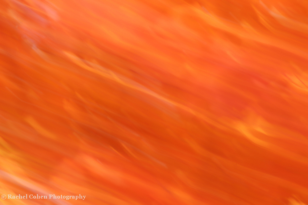 """""""Blushing Peach""""<br /> <br /> A lovely abstract image in blushing peach. Flowing layers of beautiful peach, orange, white, with a light pink blush!!<br /> <br /> Nature Abstracts by Rachel Cohen"""