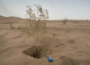 Botanist taking ground temperature at the root level of a desert tree.