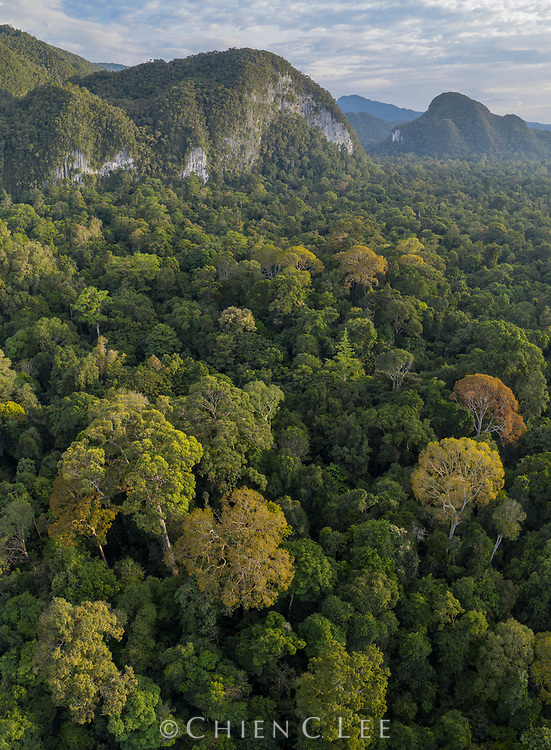 With its varied topography of limestone mountains and lowland rainforest, Mulu National Park is home to one of the richest floral diversities in Borneo. Sarawak, Malaysia (Borneo).