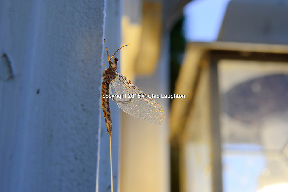 May fly by house light stock photo image