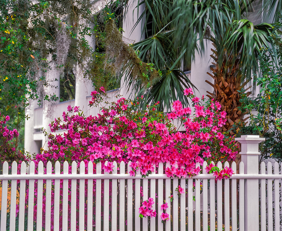 Fence with blooming flowers and columns of mansion beyond, Beaufort, SC