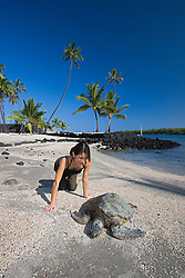 Woman visitor observing Green Sea Turtle, Chelonia mydas, basking in the sun on beach at Keone`ele Cove, the Great Wall bult in the mid-1500s, and Coconut Palms, Cocos nucifera, in background, Pu`uhonua o Honaunau or Place of Refuge National Historical Park, Honaunau, Big Island, Hawaii