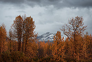Trees are adorned with Autumn colors in Valdez, Alaska