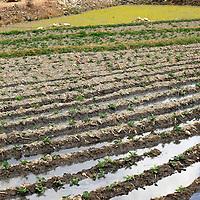 Asia, Bhutan, Paro. Farm in the Paro Valley
