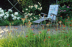 Decked seating area at Ketley's used to disguise old air raid shelter. Hieracium in the foreground, Rosa 'Prosperity' , R. 'Buff Beauty' and R. 'Cornelia' at the back. Design: Helen Yemm
