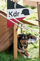 """It seems my rise through the ranks has occurred with exceptional speed - .At only 3 years old the youngest """"Kompanie Kommandeur"""" in the Division .Pickering 2011.Sunday 16th October 2011. Image © Paul David Drabble"""