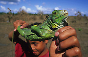 Central America, Honduras, Aguan Valley. Devastation in the aftermath of Hurricane Mitch. High winds and flooding. Soil erosion caused by deforestation.  Refugee with iguana, caught for food.