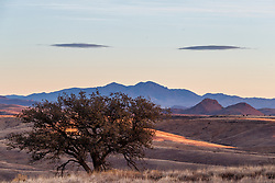 Lone tree and mountains, Ladder Ranch, west of Truth or Consequences, New Mexico, USA.